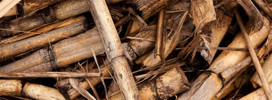 Ventajas de la biomasa y consolidación